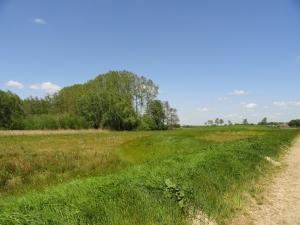 Raalte dorpsbos foto 2