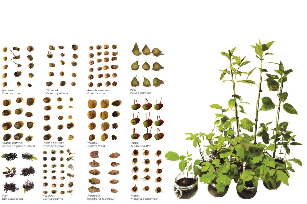 Peelhorst scharrelbos planten en noten rgb